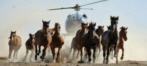 helicopter1 horses